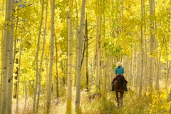 horse_apsens